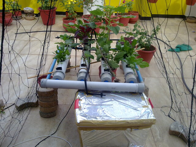 Hydroponics-NFT-overview-640px.jpg